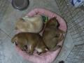 Finalmente se durmieron los cachorros.