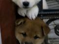 Cachorros tratando de escapar.