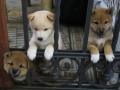 Los cachorros planeando el gran escape.