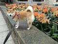 Suko y sus flores favoritas