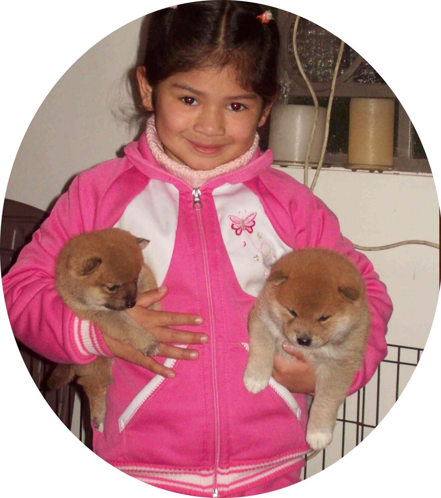nena-con-2-cachorritos-shiba-inu