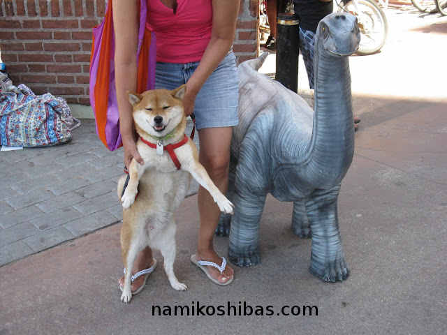 shiba-inu-suko-and-her-brontosaur-friend